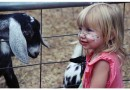 Hall County Summer Fun With The Kids Idea – The Petting Zoo