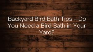 Backyard Bird Bath Tips – Do You Need a Bird Bath in Your Yard?