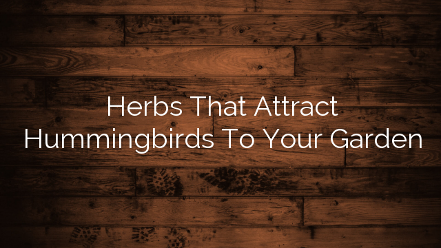Herbs That Attract Hummingbirds To Your Garden
